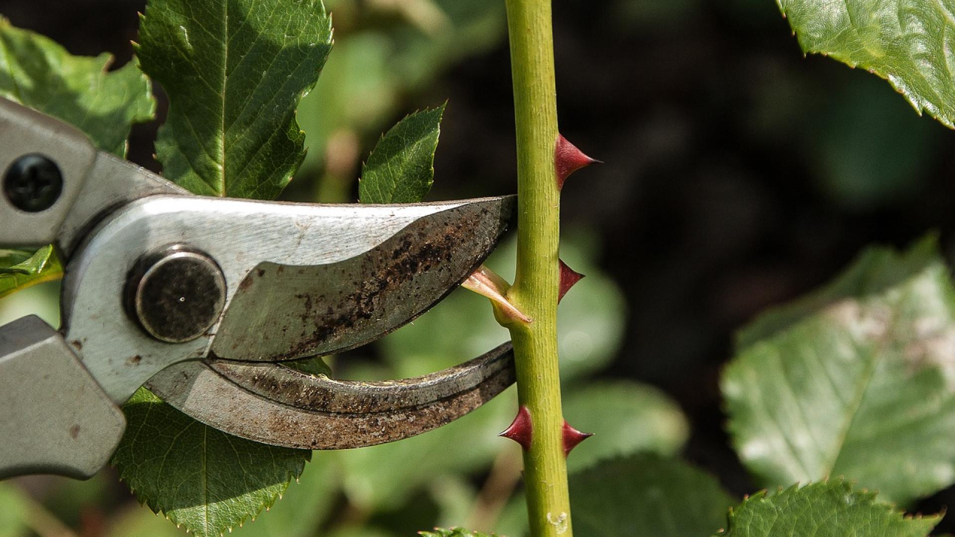 Quels outils pour un jardinage réussi ?